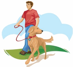 dresser son chien marche au pied