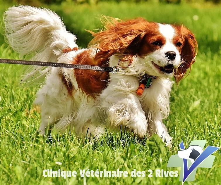 clinique veterinaire deux rives