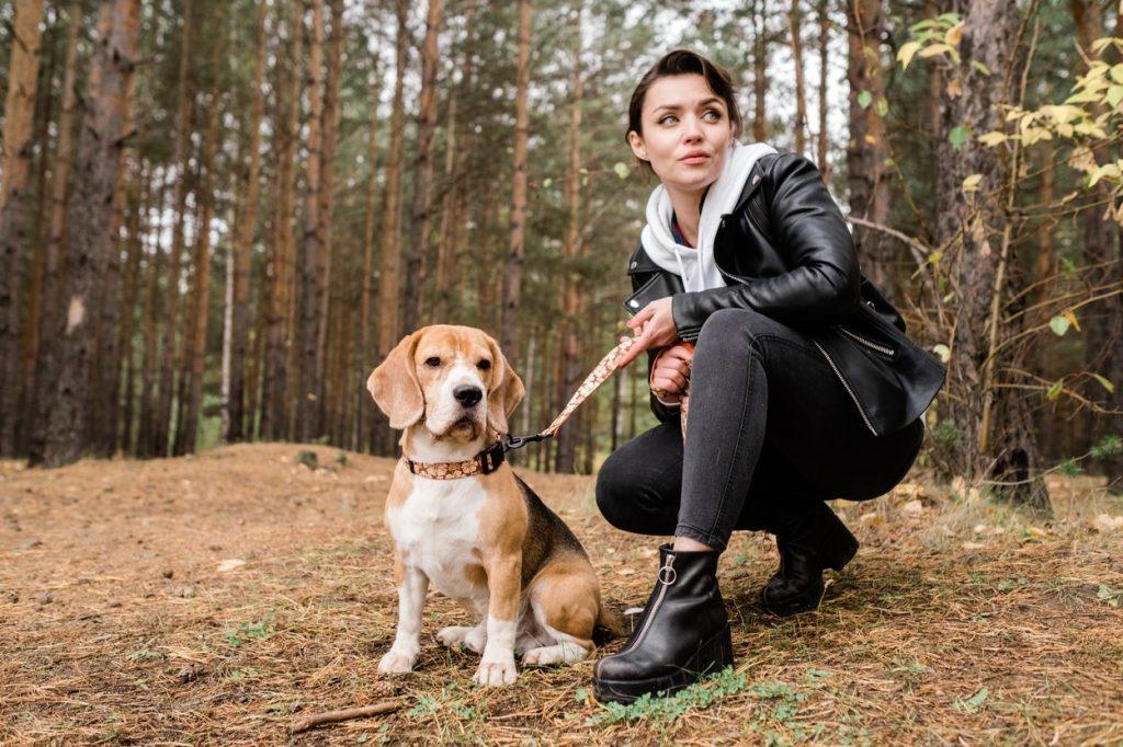 Chien beagle avec sa maîtresse au pied