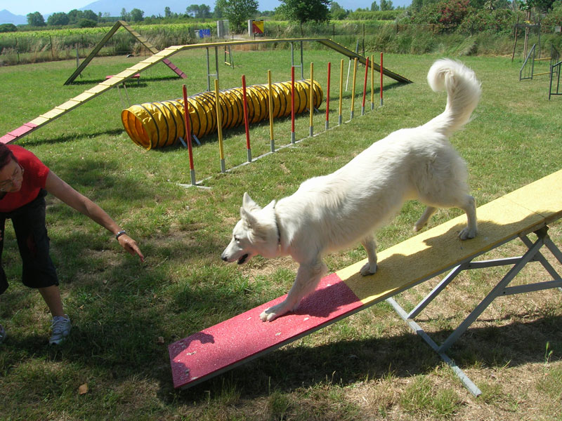 education berger blanc suisse