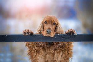 dressage chien pessac