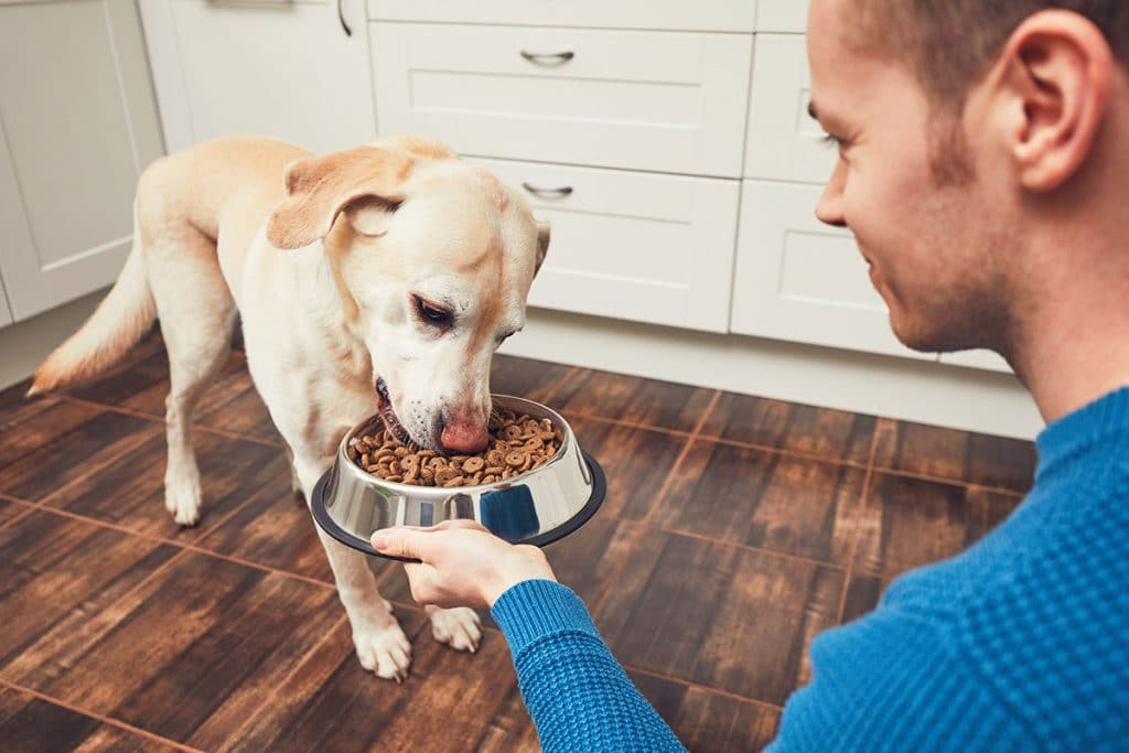 Comparatif des meilleures croquettes pour chien stérilisé