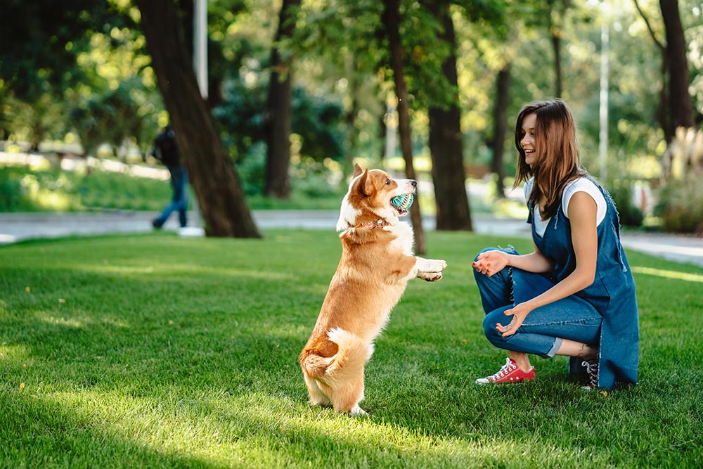 cours d'éducation canine à Bordeaux