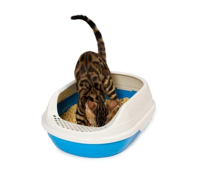Une litiere de chat doit etre propre