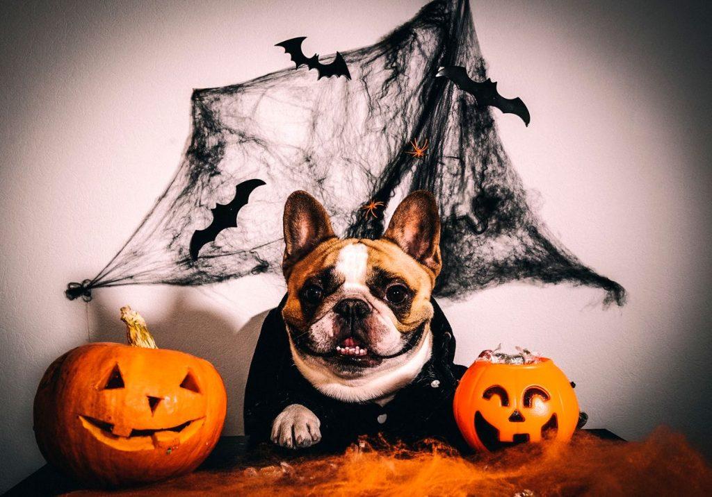 attention aux décos d'halloween pour vos chien