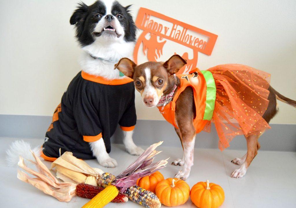 fêter halloween avec son chien