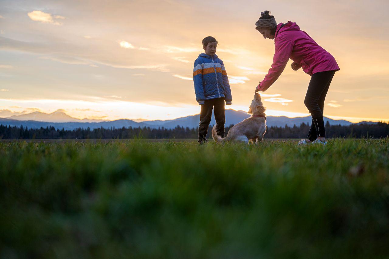 éducation du chien renforcement positif
